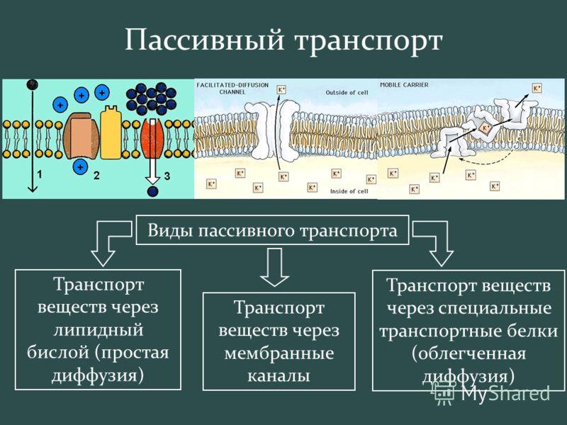 Виды пассивного транспорта Транспорт веществ через липидный бислой (простая диффузия) Транспорт веществ через мембранные каналы Транспорт веществ через специальные транспортные белки (облегченная диффузия)