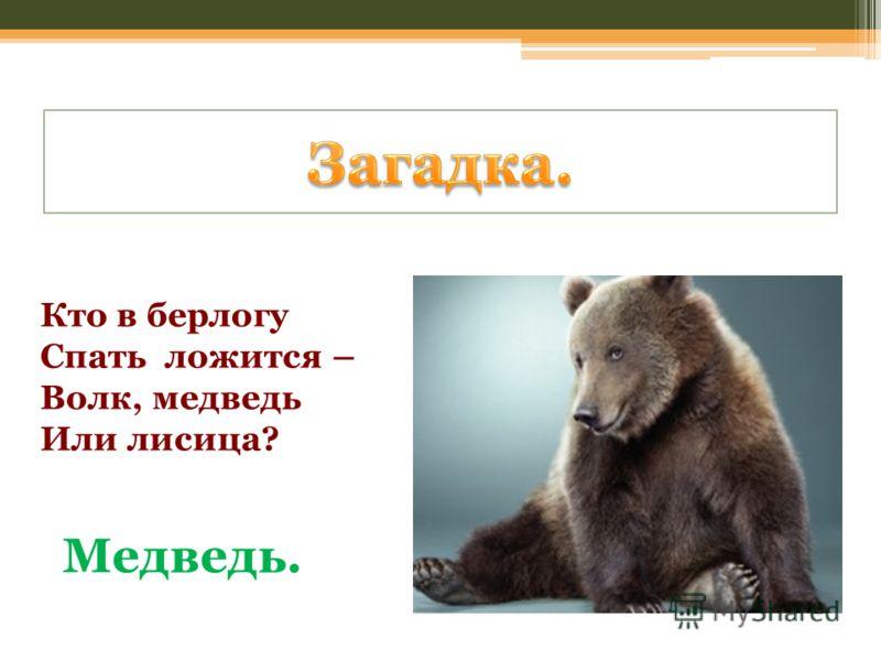 Кто в берлогу Спать ложится – Волк, медведь Или лисица? Медведь.