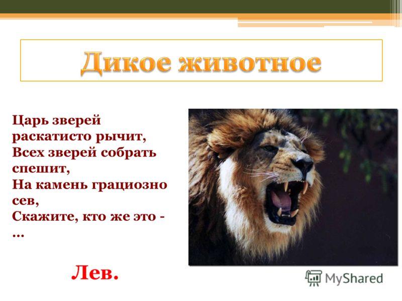 Царь зверей раскатисто рычит, Всех зверей собрать спешит, На камень грациозно сев, Скажите, кто же это - … Лев.