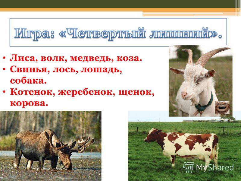 Лиса, волк, медведь, коза. Свинья, лось, лошадь, собака. Котенок, жеребенок, щенок, корова.