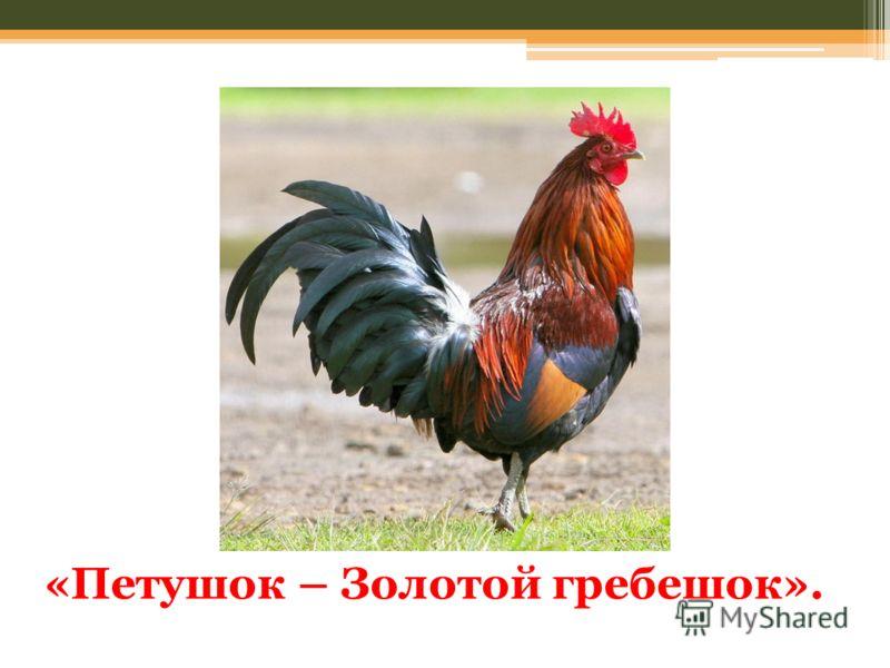 «Петушок – Золотой гребешок».
