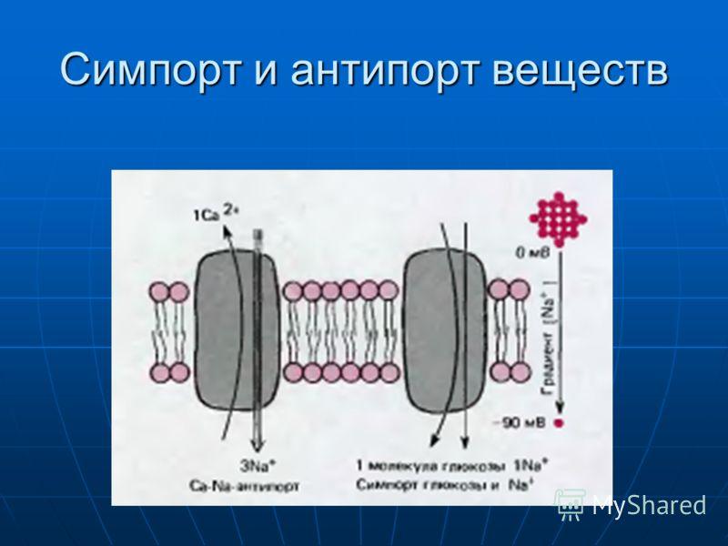 Симпорт и антипорт веществ