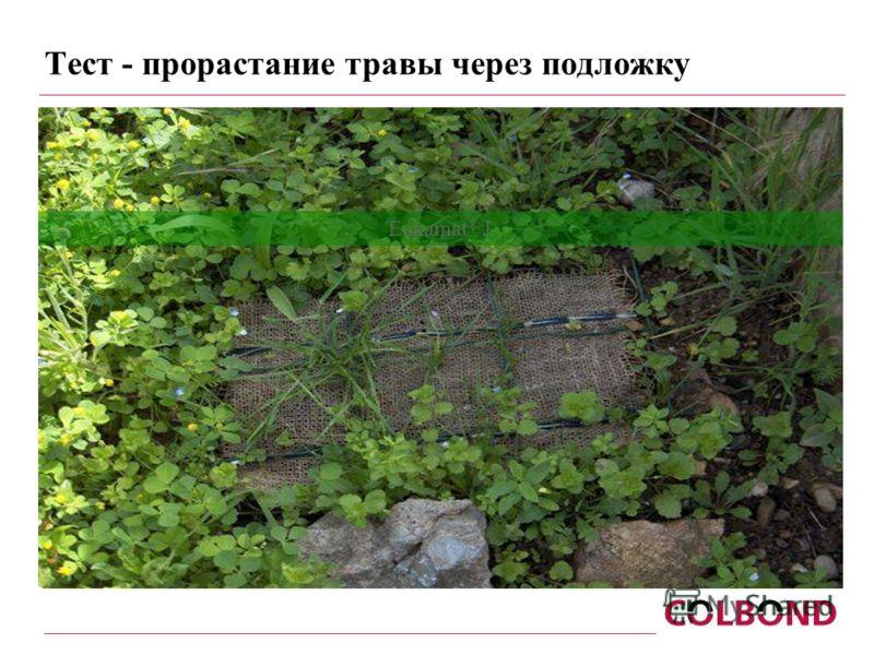Тест - прорастание травы через подложку Enkamat ® J