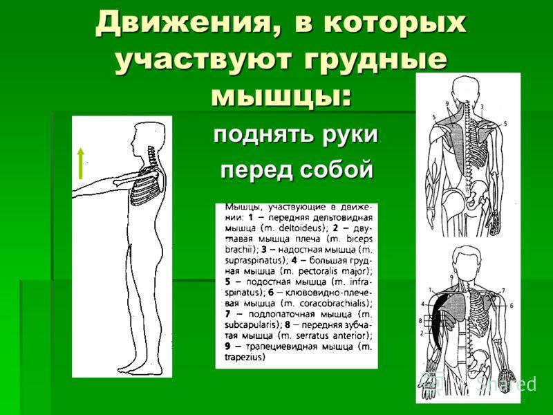 Движения, в которых участвуют грудные мышцы: поднять руки поднять руки перед собой перед собой
