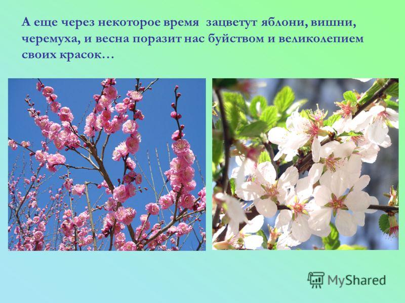 А еще через некоторое время зацветут яблони, вишни, черемуха, и весна поразит нас буйством и великолепием своих красок…