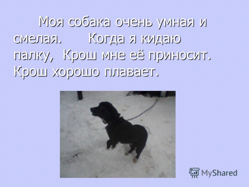 Моя собака очень умная и смелая.Когда я кидаю палку, Крош мне её приносит. Крош хорошо плавает.