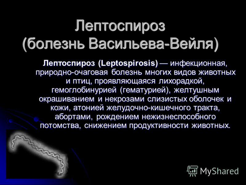 Лептоспироз (болезнь Васильева-Вейля) Лептоспироз (Leptospirosis) инфекционная, природно-очаговая болезнь многих видов животных и птиц, проявляющаяся лихорадкой, гемоглобинурией (гематурией), желтушным окрашиванием и некрозами слизистых оболочек и ко
