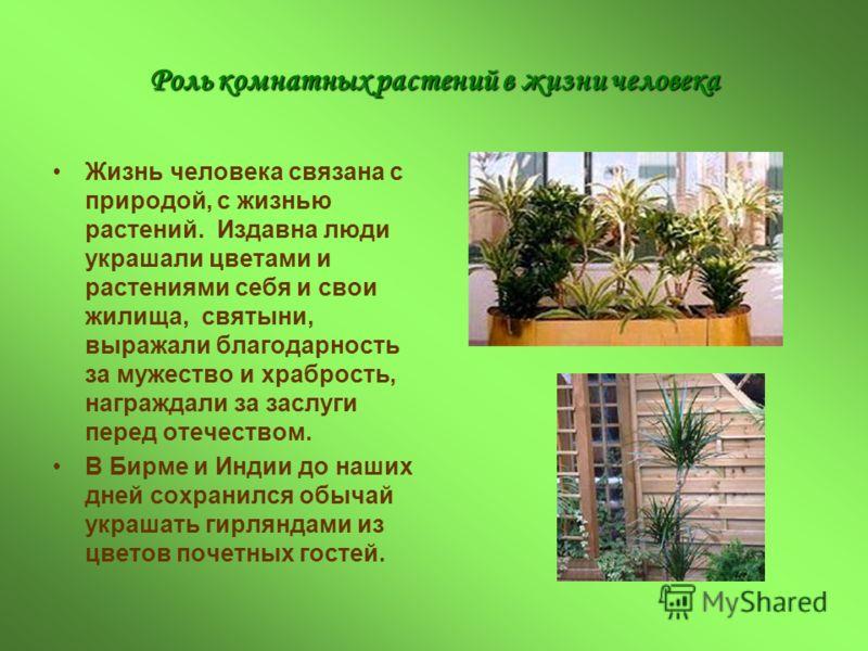 Роль комнатных растений в жизни человека Жизнь человека связана с природой, с жизнью растений. Издавна люди украшали цветами и растениями себя и свои жилища, святыни, выражали благодарность за мужество и храбрость, награждали за заслуги перед отечест