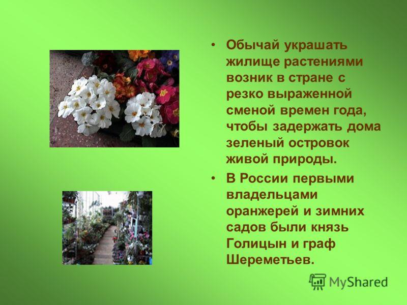 Обычай украшать жилище растениями возник в стране с резко выраженной сменой времен года, чтобы задержать дома зеленый островок живой природы. В России первыми владельцами оранжерей и зимних садов были князь Голицын и граф Шереметьев.