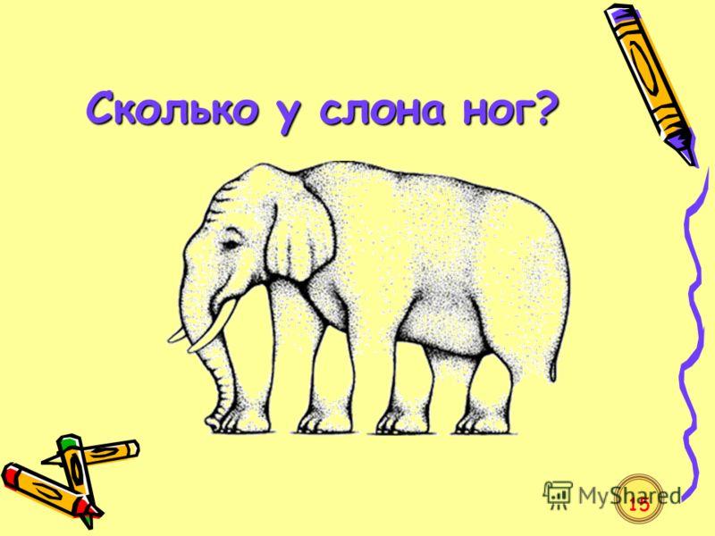Сколько у слона ног? 15