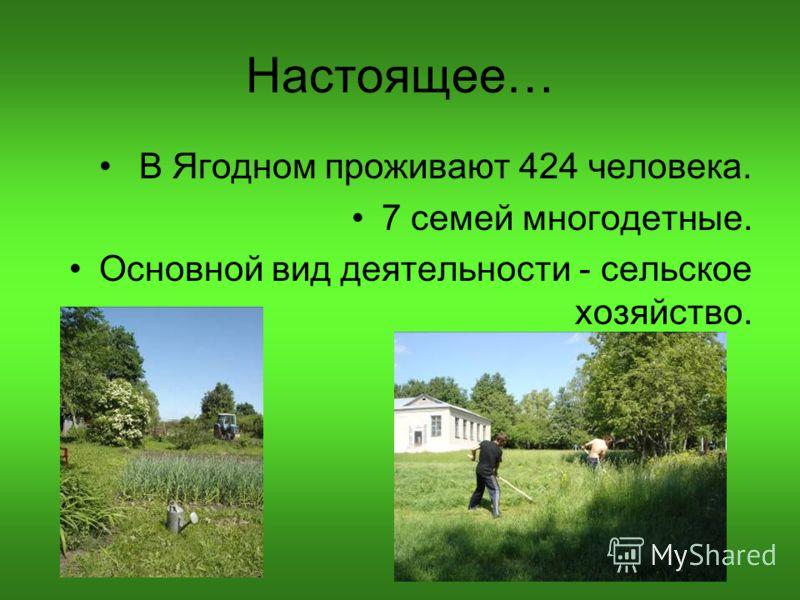 Настоящее… В Ягодном проживают 424 человека. 7 семей многодетные. Основной вид деятельности - сельское хозяйство.