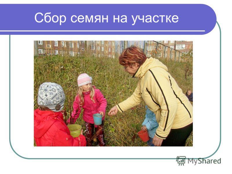 Сбор семян на участке