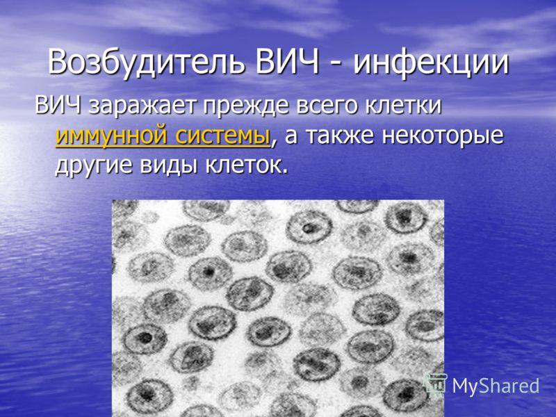 Возбудитель ВИЧ - инфекции ВИЧ заражает прежде всего клетки иммунной системы, а также некоторые другие виды клеток. иммунной системы иммунной системы