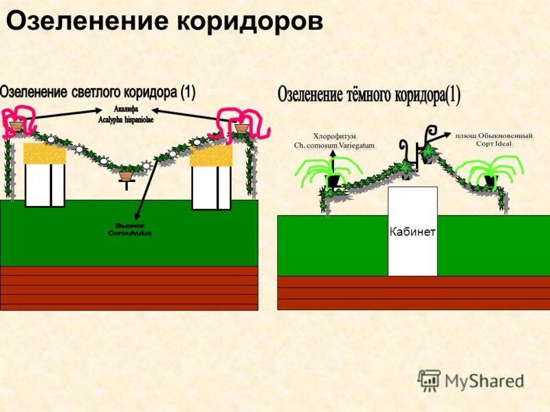 Озеленение коридоров Кабинет