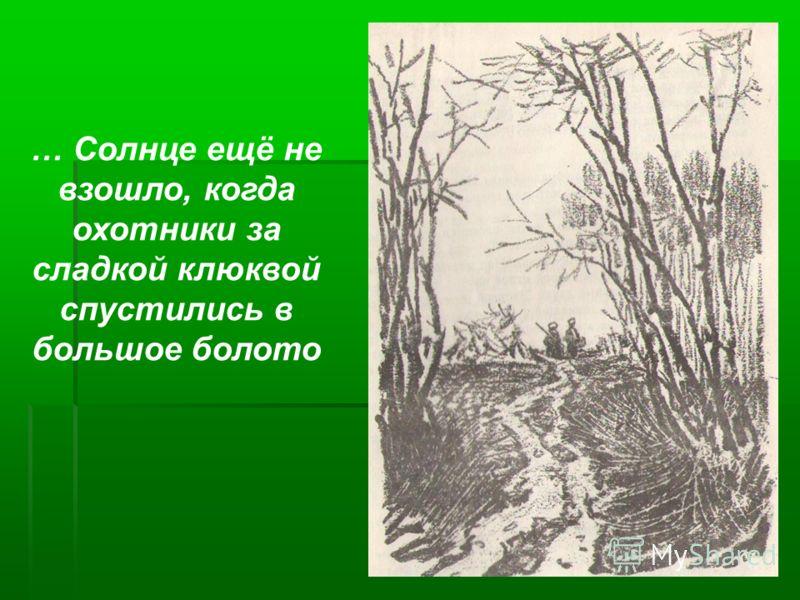 … Солнце ещё не взошло, когда охотники за сладкой клюквой спустились в большое болото