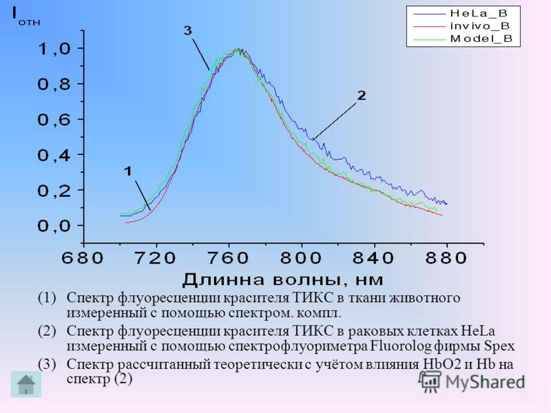 (1)Спектр флуоресценции красителя ТИКС в ткани животного измеренный с помощью спектром. компл. (2)Спектр флуоресценции красителя ТИКС в раковых клетках HeLa измеренный с помощью спектрофлуориметра Fluorolog фирмы Spex (3)Спектр рассчитанный теоретиче