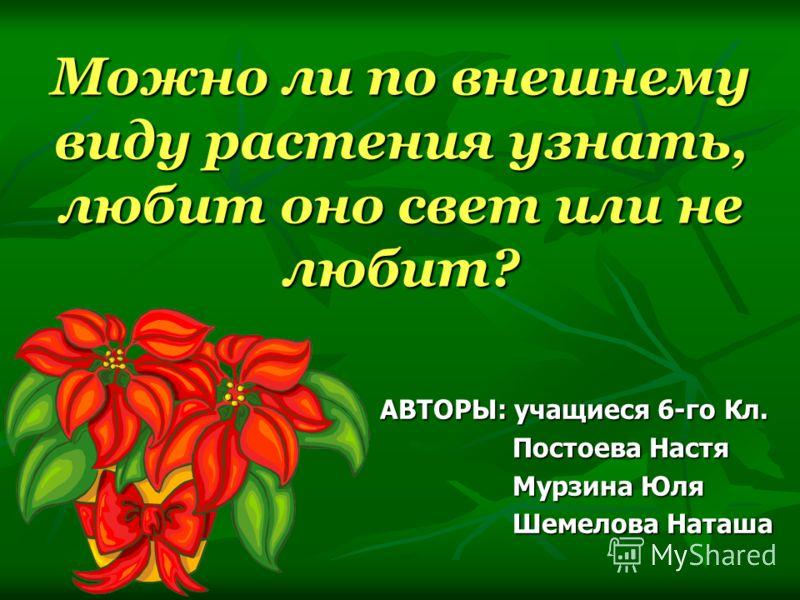 Можно ли по внешнему виду растения узнать, любит оно свет или не любит? АВТОРЫ: учащиеся 6-го Кл. Постоева Настя Постоева Настя Мурзина Юля Мурзина Юля Шемелова Наташа Шемелова Наташа