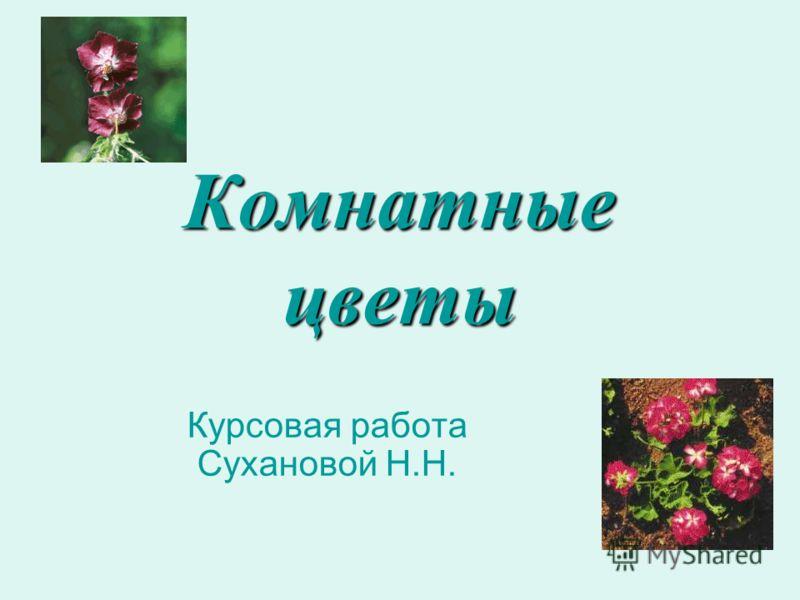 Комнатные цветы Курсовая работа Сухановой Н.Н.