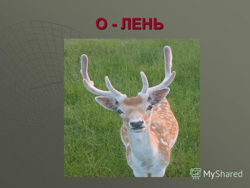 О - ЛЕНЬ О - ЛЕНЬ