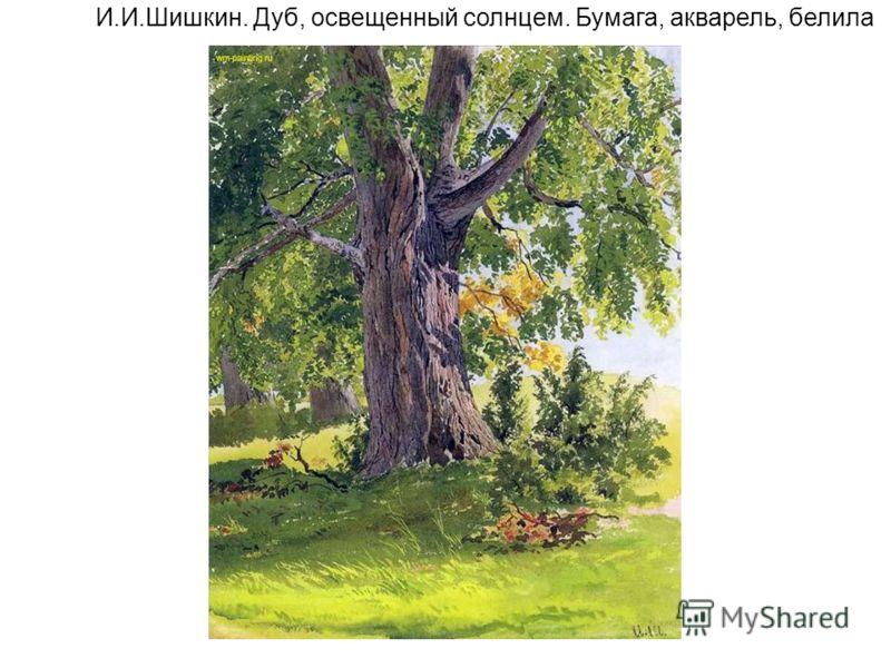 И.И.Шишкин. Дуб, освещенный солнцем. Бумага, акварель, белила
