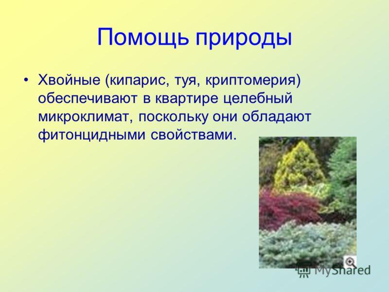 Помощь природы Хвойные (кипарис, туя, криптомерия) обеспечивают в квартире целебный микроклимат, поскольку они обладают фитонцидными свойствами.