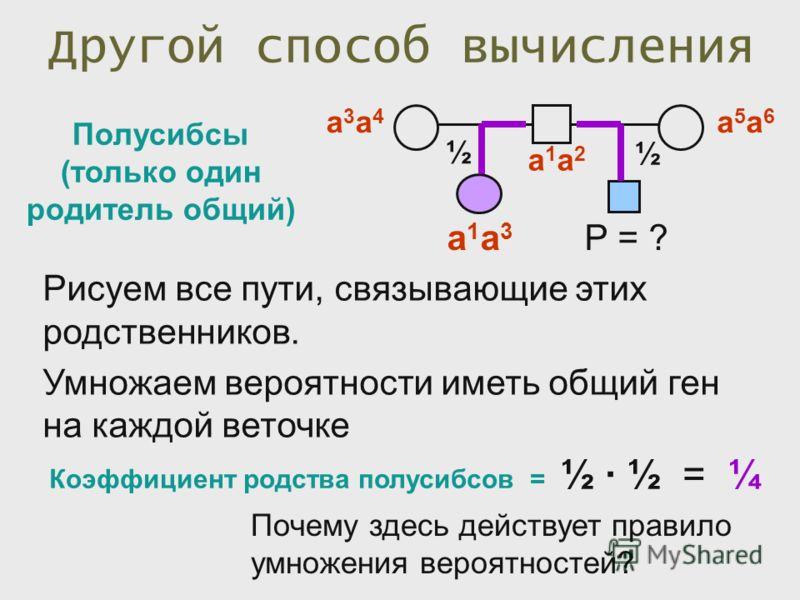 Другой способ вычисления Полусибсы (только один родитель общий) Коэффициент родства полусибсов = ½ ½ = ¼ а1а2а1а2 а3а4а3а4 а1а3а1а3 Р = ? а5а6а5а6 ½ ½ Рисуем все пути, связывающие этих родственников. Умножаем вероятности иметь общий ген на каждой вет