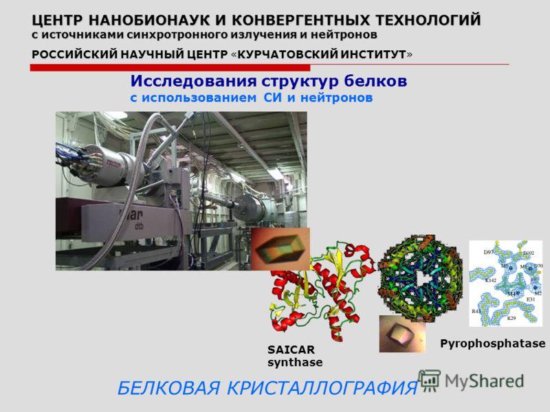 Исследования структур белков с использованием СИ и нейтронов Pyrophosphatase SAICAR synthase БЕЛКОВАЯ КРИСТАЛЛОГРАФИЯ ЦЕНТР НАНОБИОНАУК И КОНВЕРГЕНТНЫХ ТЕХНОЛОГИЙ с источниками синхротронного излучения и нейтронов РОССИЙСКИЙ НАУЧНЫЙ ЦЕНТР «КУРЧАТОВСК