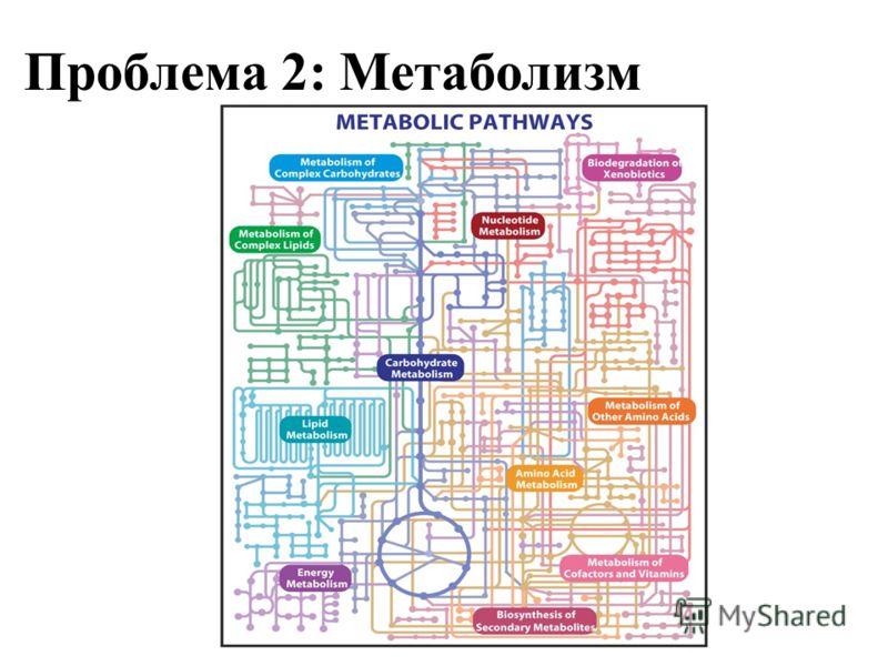 Проблема 2: Метаболизм