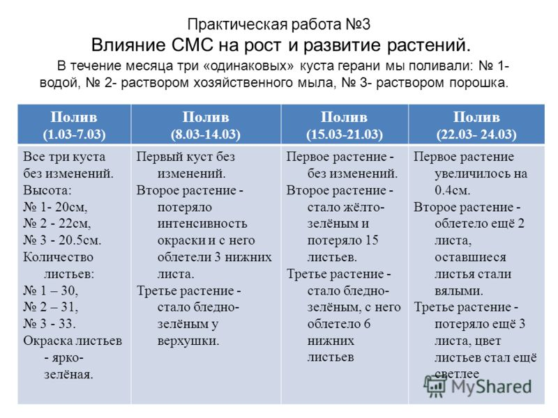 Практическая работа 3 Влияние СМС на рост и развитие растений. В течение месяца три «одинаковых» куста герани мы поливали: 1- водой, 2- раствором хозяйственного мыла, 3- раствором порошка. Полив (1.03-7.03) Полив (8.03-14.03) Полив (15.03-21.03) Поли