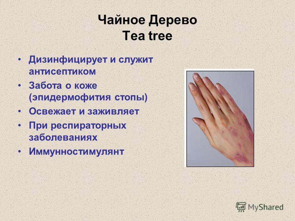 Чайное Дерево Tea tree Дизинфицирует и служит антисептиком Забота о коже (эпидермофития стопы) Освежает и заживляет При респираторных заболеваниях Иммунностимулянт