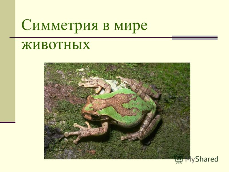 Симметрия в мире животных