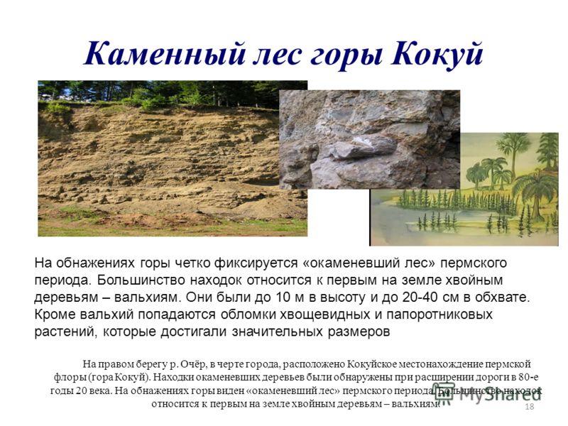 18 Каменный лес горы Кокуй На обнажениях горы четко фиксируется «окаменевший лес» пермского периода. Большинство находок относится к первым на земле хвойным деревьям – вальхиям. Они были до 10 м в высоту и до 20-40 см в обхвате. Кроме вальхий попадаю