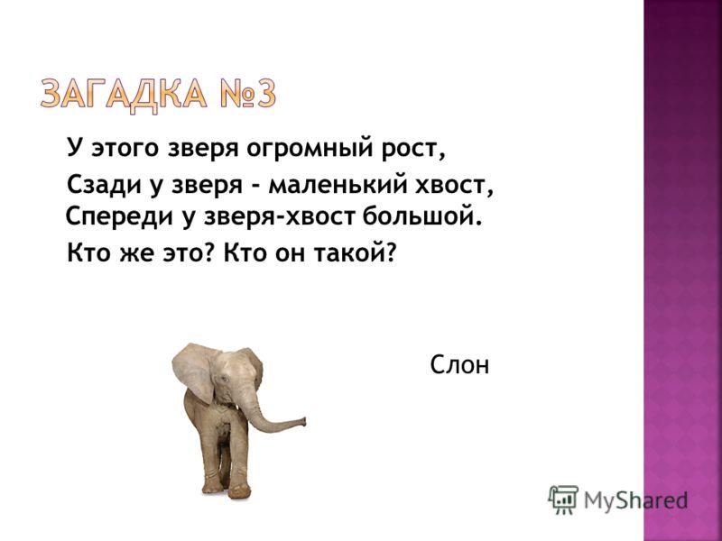У этого зверя огромный рост, Сзади у зверя - маленький хвост, Спереди у зверя-хвост большой. Кто же это? Кто он такой? Слон