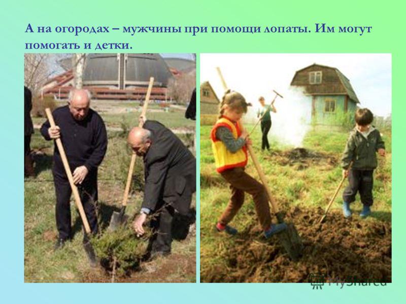 А на огородах – мужчины при помощи лопаты. Им могут помогать и детки.