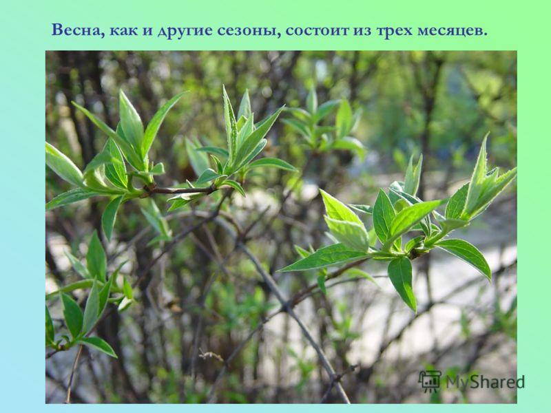 Весна, как и другие сезоны, состоит из трех месяцев.