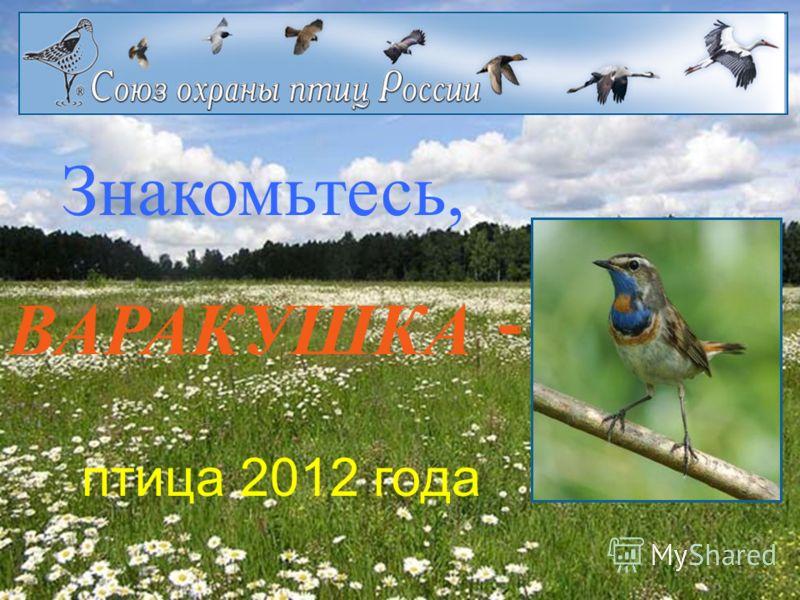 Знакомьтесь, ВАРАКУШКА - птица 2012 года