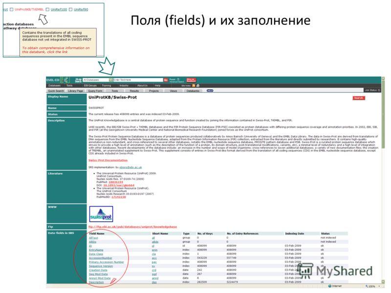 Поля (fields) и их заполнение