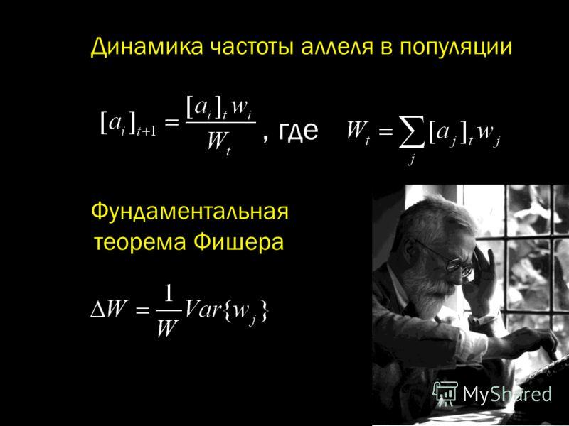 Фундаментальная теорема Фишера, где Динамика частоты аллеля в популяции