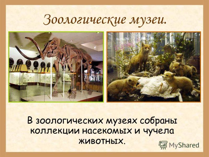 Зоологические музеи. В зоологических музеях собраны коллекции насекомых и чучела животных.