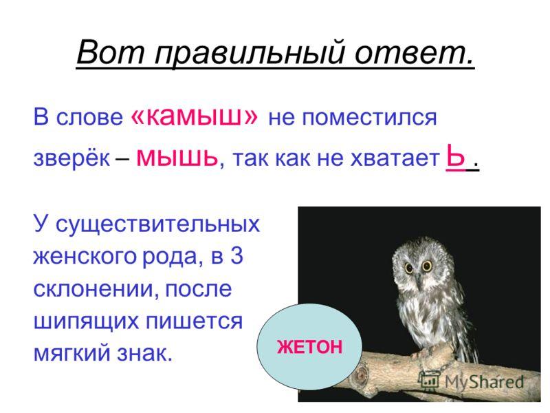 Вот правильный ответ. В слове «камыш» не поместился зверёк – мышь, так как не хватает Ь. У существительных женского рода, в 3 склонении, после шипящих пишется мягкий знак. ЖЕТОН