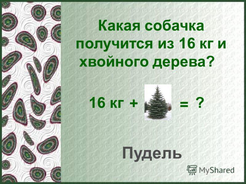 Какая собачка получится из 16 кг и хвойного дерева? 16 кг + = ? Пудель