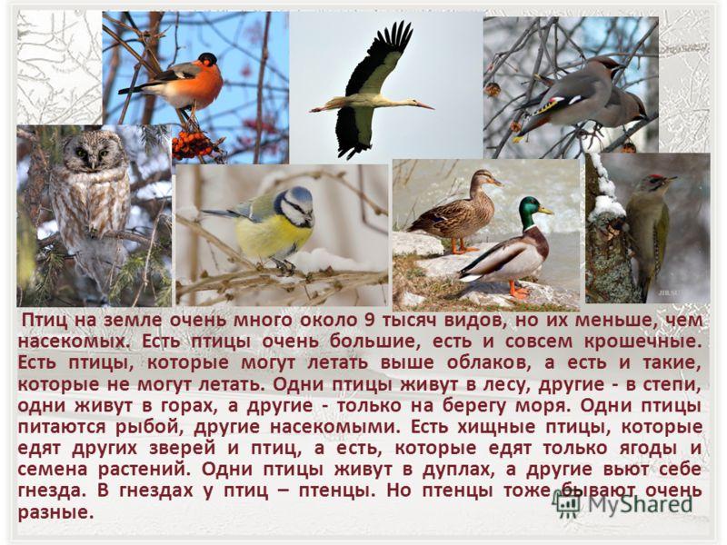 Птиц на земле очень много около 9 тысяч видов, но их меньше, чем насекомых. Есть птицы очень большие, есть и совсем крошечные. Есть птицы, которые могут летать выше облаков, а есть и такие, которые не могут летать. Одни птицы живут в лесу, другие - в