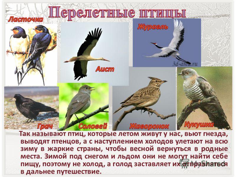 Так называют птиц, которые летом живут у нас, вьют гнезда, выводят птенцов, а с наступлением холодов улетают на всю зиму в жаркие страны, чтобы весной вернуться в родные места. Зимой под снегом и льдом они не могут найти себе пищу, поэтому не холод,