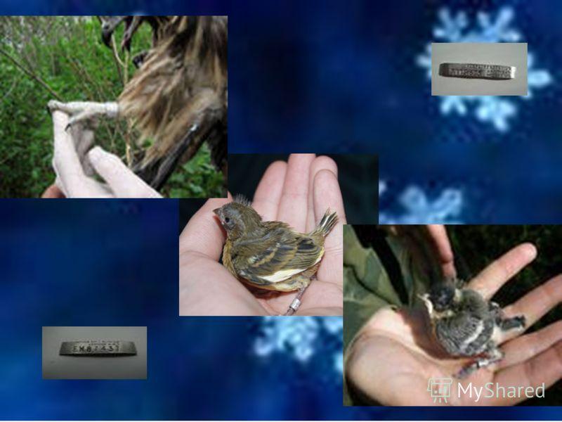 -Давайте поиграем! Игра «Распредели птиц на 2 группы: зимующие и перелётные».