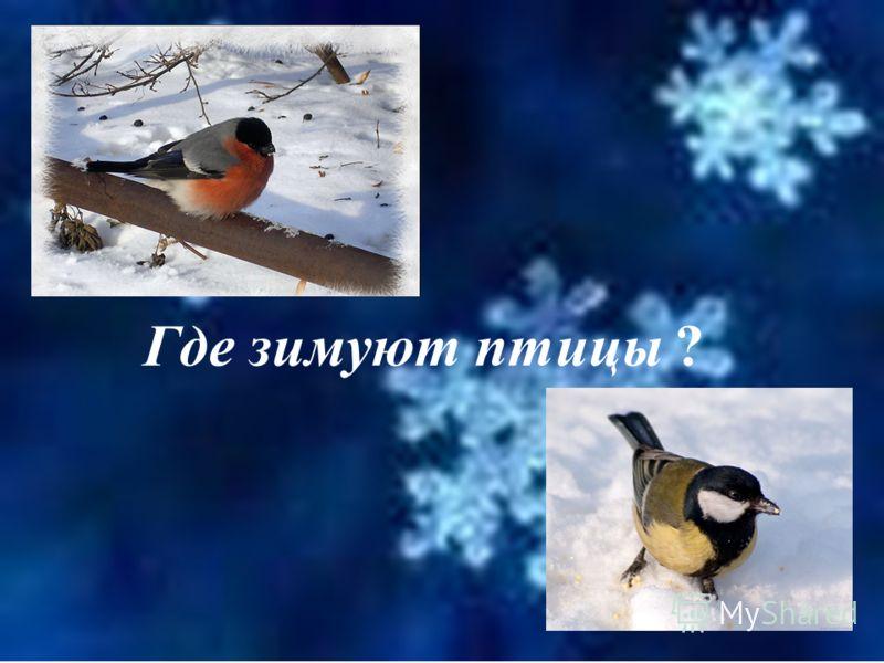 зимующие, или осёдлые перелётные
