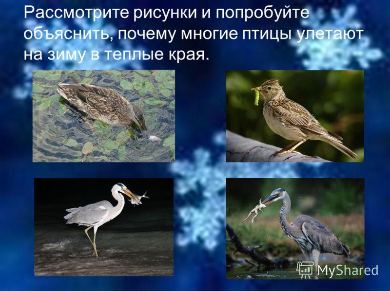 Где зимуют птицы ?