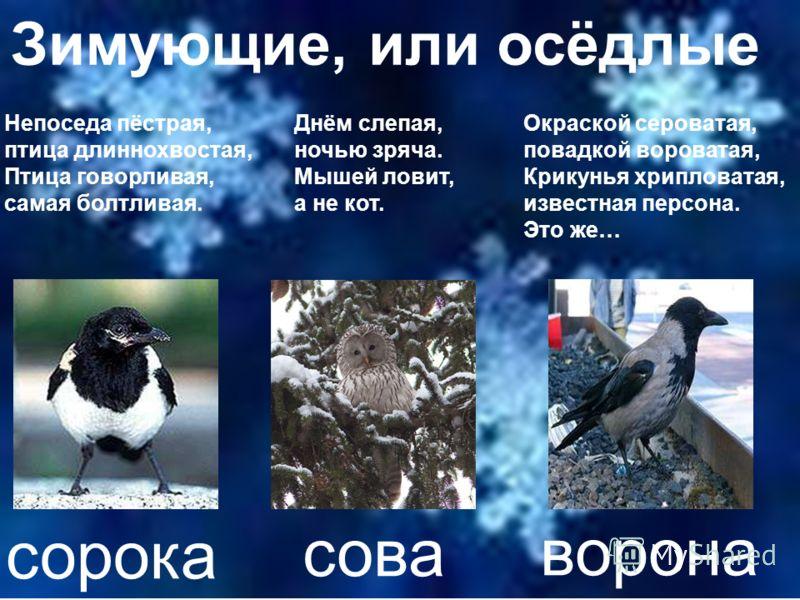 Рассмотрите рисунки и попробуйте объяснить, почему многие птицы улетают на зиму в теплые края.