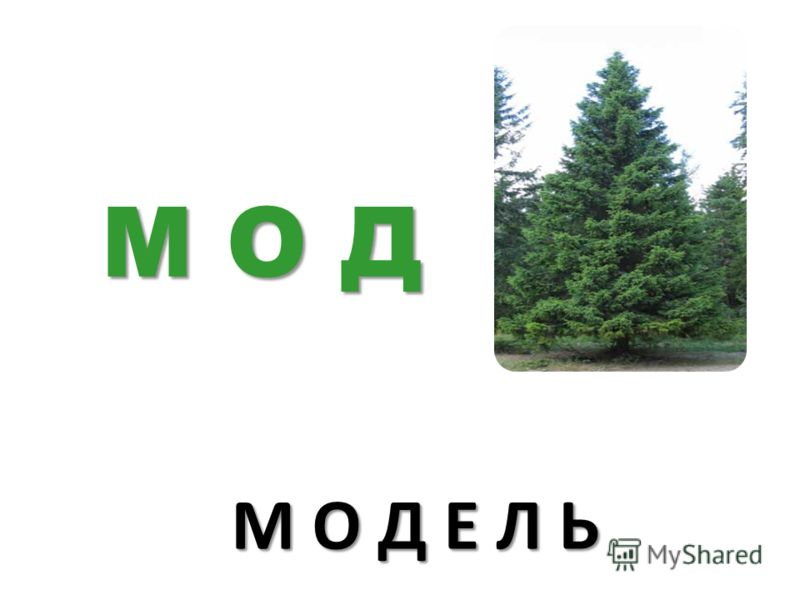 М О Д Е Л Ь