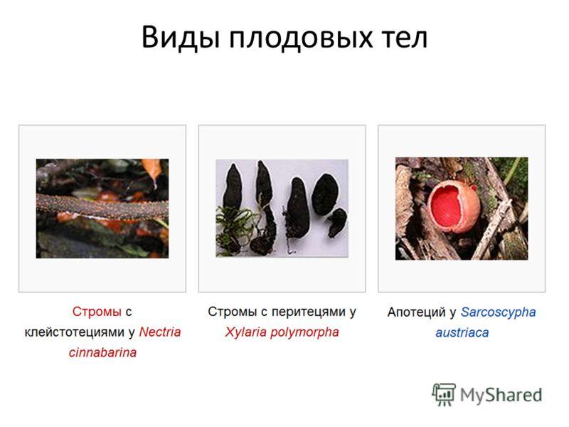 Виды плодовых тел