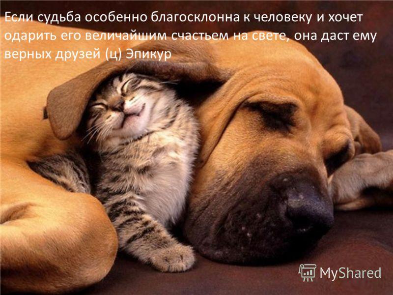 Если судьба особенно благосклонна к человеку и хочет одарить его величайшим счастьем на свете, она даст ему верных друзей (ц) Эпикур